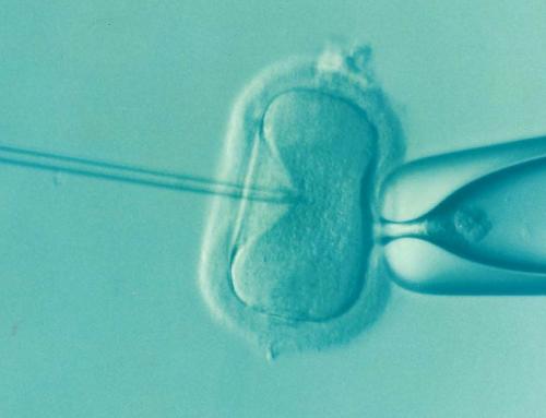 Ö / Buchtipp: Imago Hominis zu Fragen der Reproduktionsmedizin