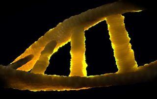 Durch Mutagenese gewonnene Organismen sind genetisch veränderte Organismen (GVO) und unterliegen grundsätzlich den vorgesehenen Verpflichtungen
